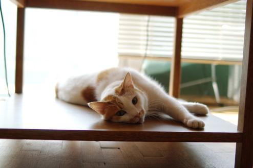 cat_gravure