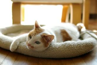 cat_wz_hotmat