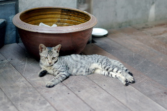 cat_040831.jpg