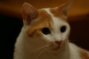 cat_up.jpg