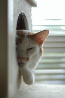 sleepingcat.jpg