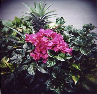 woca_flower.jpg